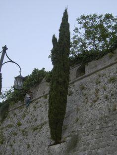 Cipresso sulle mura di Antivari in Montenegro