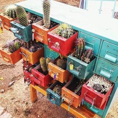 "789 Likes, 4 Comments - Free People Colorado (@fpcolorado) on Instagram: ""organization on point #cacti #dailyinspo #lovefromfp : @thewholesomecellist"""