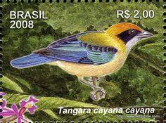 Brasil-2008 - Seloshow - Picasa Web Albums