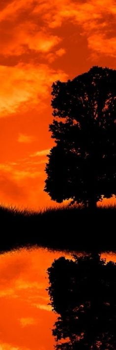 Orange Sunset.  Did you notice the clouds over the tree kind of look like a witch on her broom?