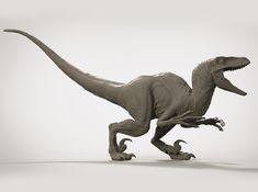VELOCIRAPTOR V02 (UTAHRAPTOR) 1/14 3d printed Jurassic World Dinosaurs, Jurassic Park World, Jurrassic Park, Dinosaur Sketch, Dinosaur Tattoos, Dinosaur Images, Dinosaur Skeleton, Extinct Animals, Prehistoric Creatures