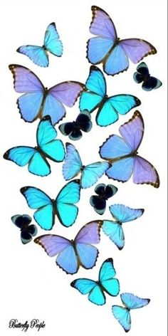 saw these butterfly arrangements in person and they are awesome! Wish I could afford one.I saw these butterfly arrangements in person and they are awesome! Wish I could afford one. Butterfly Artwork, Butterfly Pictures, Butterfly Painting, Butterfly Wallpaper, Butterfly Design, L Wallpaper, Wallpaper Backgrounds, Butterfly Kisses, Blue Butterfly
