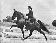 Why was this turned into the abomination called the 'big whip' it's been for the last 50 years and why can't the feds stop it!!!??  Just Google Jackie McConnell and you'll see the freak show those assholes call horse training!