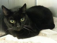 Mount Holly, NJ | Baby is a very sweet 10 year old who was surrendered for no fault of her own. She is a beautiful...