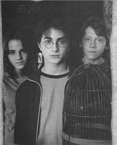 Hermione,Harry & Rupert