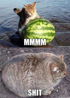 Funny Cat Memes 498421883761690718 - 35 Funny Cat Pictures That Are Just Hilarious Source by Funny Animal Jokes, Stupid Funny Memes, Cute Funny Animals, Cute Baby Animals, Cute Cats, Funny Cats, Funniest Animals, Cat Fun, Funny Cat Photos