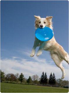 Playing frisbee with your dog