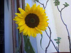 Oferta do florista pelo aniversário da minha mãe