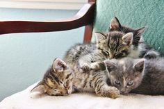 Lovely-KittyCats, photogenicfelines: (viva_victoria)