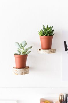 Birch Slice Floating Plant Shelves Tutorial | @fallfordiy