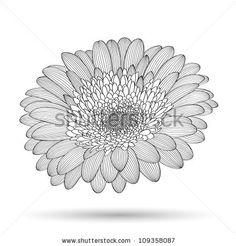 Hand-drawing  floral background. Vector flower gerbera. Element for design. - stock vector