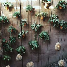 Hanging plants to hide ugly concrete wall
