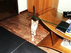 Кот, просто кот