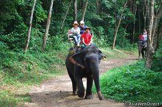 4-in-1 Half-Day Safari Tour - Phuket Nature Tour