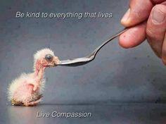 parrots, inspir, compass, birds, baby chicks
