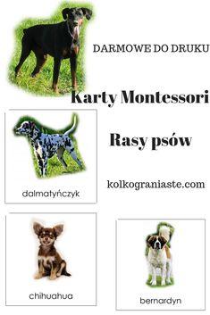 karty do lekcji trójstopniowej, karty Montessori, dla dziecka, nauka, rasy psów, darmowe do druku Montessori