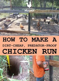 You can make your own chicken run out of dirt-cheap materials, some of which are probably lying around your back yard right now. Photos and videos included. Source by oakhh and me ideas Cheap Chicken Coops, Chicken Coop Run, Diy Chicken Coop Plans, Chicken Pen, Chicken Garden, Chicken Coop Designs, Backyard Chicken Coops, Building A Chicken Coop, Chickens Backyard