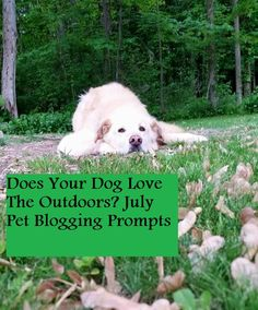 Are you stuck for a blog post idea?  Here are some great #July prompts from BlogPaws