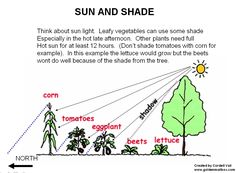 1000 images about partial shade garden on pinterest for Partial shade garden designs