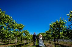 Rose Bank Winery Wedding Photos: Megan and Mike's beautiful and summery wedding!