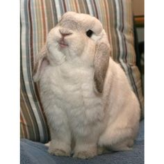 19 Reasons Bunnies Are The Most Underrated Pet ❤ liked on Polyvore featuring animals