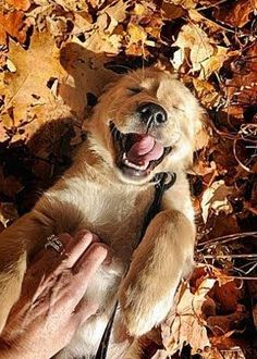 This pup is feeling nothing but pure joy!