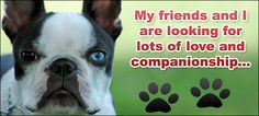 Want a Boston...please consider adopting from a rescue. In Ohio, Michigan, Indiana...you can adopt from Midwest Boston Terrier Rescue