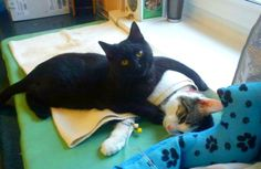 A caring cat is providing comfort to sick animals as they undergo medical treatment at a shelter in Poland.