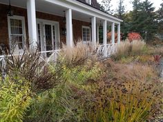 The Calamagrotis 'Karl Foerster'  keeps the rhythm of the planting moving along the porch.