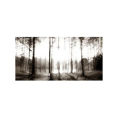 I would love this on the wall of my bedroom | The Forest at Sunrise Canvas | dotandbo.com