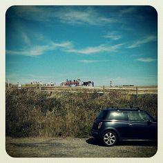 Car, horse and cart - Driving Class, Cart, Horses, Phone, Telephone, Karting, Horse, Mobile Phones, Words