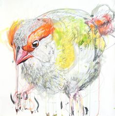 Meaghan Potter, Lines Between Recognising (Red Bower Finch) IIII  , 2017, Watercolour, Ink and Conte Charcoal on Arches 300gsm Watercolour paper, 100 x 100 cm, .M Contemporary, Art Gallery, 37 Ocean St, Woollahra, NSW, enquire at gallery@mcontemp.com
