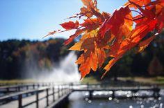 PENTAX Photo Gallery : Fall Leaves - by David Fletcher