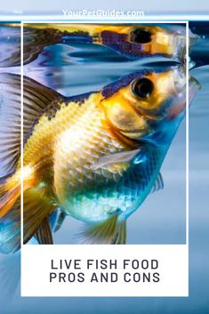 The type of food you choose to feed your aquarium fish will have a major impact on their health. Here are the basics of live foods so that you can discover how they can benefit your freshwater aquarium fish. Aquarium Fish Food, Diy Aquarium, Freshwater Aquarium Fish, Shrimp And Eggs, Sea Monkeys, Brine Shrimp, Freeze Drying Food, Fish Care, Saltwater Tank