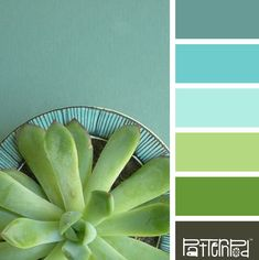 Using Color Theory To Create A Better Palette Aqua Color Schemes, Green Colour Palette, Bedroom Color Schemes, Green Colors, Color Patterns, Color Combinations, Colour Palettes, Teal Green, Cactus E Suculentas