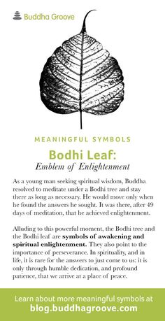 Bodhi Tree definition and meaning | Collins English Dictionary