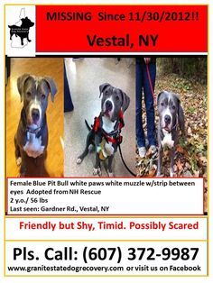 Lady was a NH rescue. She may be very scared. There has NOT BEEN ONE sighting!!! The rescue she was adopted from is Pibbles and More Animal Rescue. They are offering a $3,000 reward for any information leading to her safe return. If you have any information contact Shannon at the number on the flyer. — with Cindi Furkidz. Like