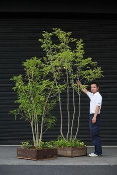 Big Potted Plants, Green Plants, Interior Garden, Interior Plants, Side Garden, Garden Pots, Japanese Garden Backyard, Minimalist Garden, Garden Angels