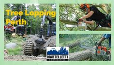 When talking about property improvement, you need to look for experts that can help you. You also need to determine if services like tree lopping is essential. Tree Lopping, Perth, Outdoor Power Equipment, Home Improvement, Monster Trucks, Garden Tools, Home Improvements, Interior Design, Home Improvement Projects