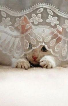 Hi Cutie...