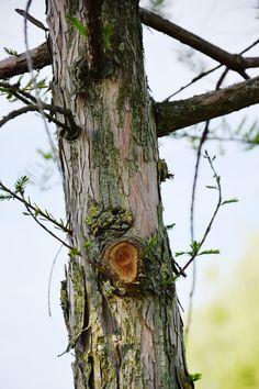 #freespirit #goodvibes #positivelife #positive #redhair #nature #love #peace #think #bohostyle #bohemian #quote #boho #hippie #hippiestyle #frasi #inspirational #motivational #lifequote #loveyourself #positivevibes #happiness #freepeople #tree #natura #nature #albero #treelife #bepositive