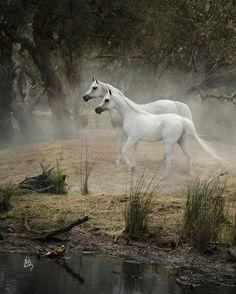Pretty horses!