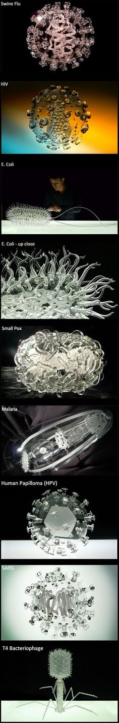 Glass replicas of viruses and bacteria