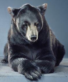 Bear by Jill Greenberg