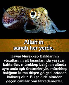 Hope You, Allah, Website