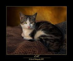 awesome 0165 Cat