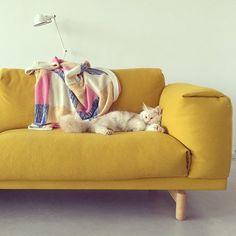 Un canapé jaune moutarde