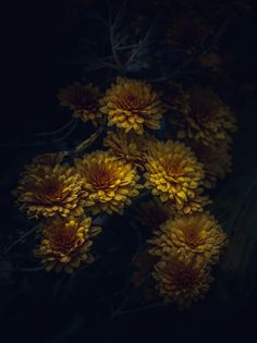Photograph When Darkness Surrounds You by Paul Barson on 500px