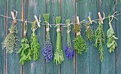 """Τα+""""μαγικά""""+βότανα+για+τα+μικροπροβλήματα+του+εντέρου"""