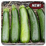 Organic Desert F1 Hybrid Zucchini A sister variety to Dunja, with added disease resistance and exceptional fruit set in hot weather. Tall plants have a broad, open architecture which makes for easy picking. Fruit are gorgeous: uniform in size and shape, dark green with slight speckles, cylindrical and very attractive. (Cucurbita pepo) Days to maturity: 50 days  Disease Resistance: Powdery Mildew, Cucumber Mosaic Virus, Zucchini Yellow Mosaic Virus, Watermelon Mosaic Virus, Papaya Ringspot…